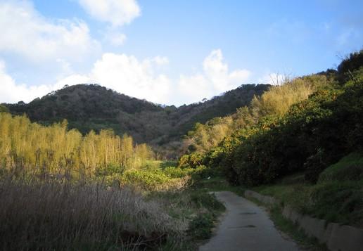 2005.3.25故郷の山2