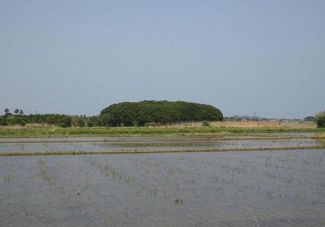 chinjunomori